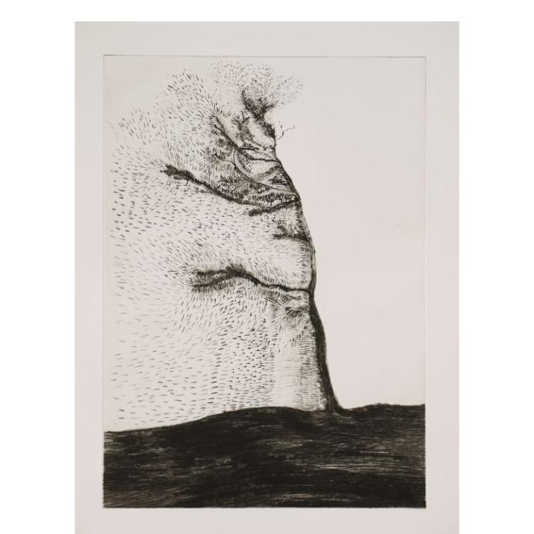 giuseppe-penone-transcription-musicale-de-la-structure-des-arbres-gravures